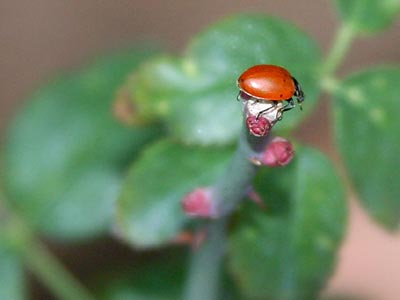A lady bug on some leaves